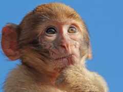 animal, обезьяна, блог