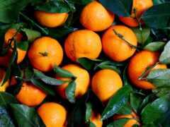 tangerine, плод, produktovyi