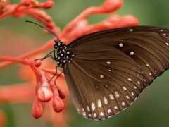 насекомое, invertebrate, бабочка