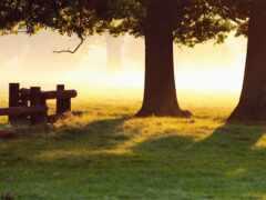 природа, дерево, осень