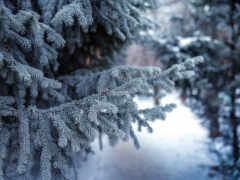 снег, winter, есть