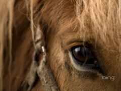 лошадь, fond, cheval