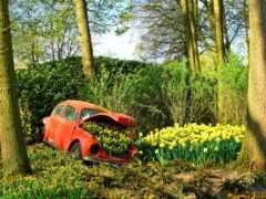 garden, парковка, volkswagen