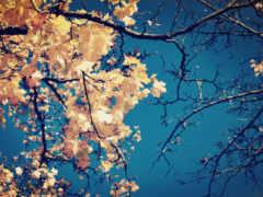 ветки, листья Фон № 33635 разрешение 1920x1200