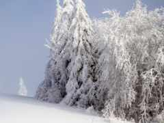 снег, fore, дерево