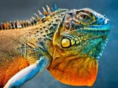 iguana, дракон, funart
