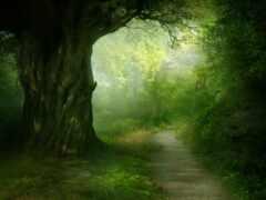лес, тропинка