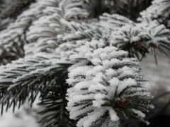 снег, зелень, перевод