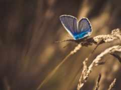бабочка, макро, трава