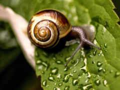snail, коллекциях, яndex