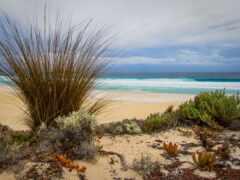 пляж, море, трава