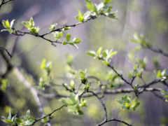 первые, листва, trees