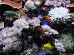 karang, ocean, fish
