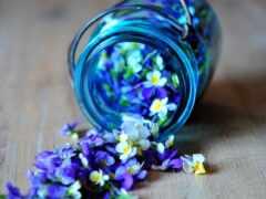 цветы, blue