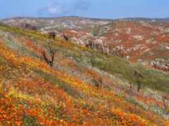 shrubland, wikipediashrubland, russian