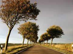 пейзажи -, trees, дорога