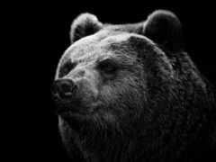 медведь, донбасс, nezalezhnost