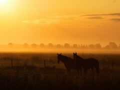 лошадь, ферма, landscape