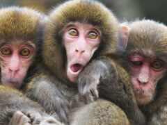обезьяна, zaytoun, прикол