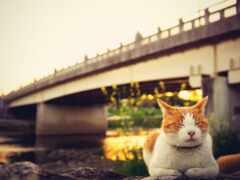 кот, создать, мост