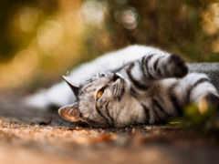 кот, усы Фон № 26761 разрешение 1920x1200