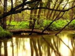 trees, reki, река