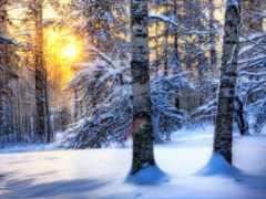 природа, весна, winter