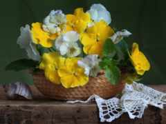 cvety, красивые, bom