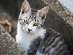 кот, картинка, kitty