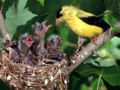 birds, baby