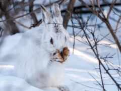 заяц, winter, снег
