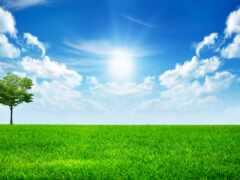 sunny, день, яркий