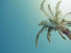 palm, небо, bezoblachnyi