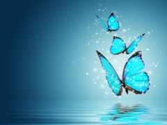 бабочки, бабочка, tochka