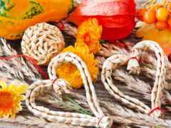 cvety, осень, хризантемы