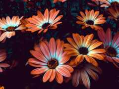 цветы, quinta, permission