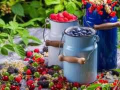 малина, черника, ягода