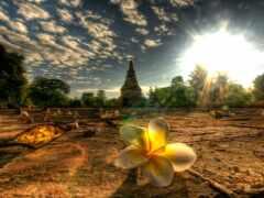 thai, таиланд, цветы