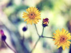 fond, ecran, fleurs Фон № 114089 разрешение 2560x1600