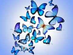 parede, papel, borboletas