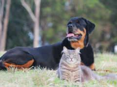 собака, серьезный кот