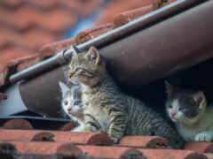 фотограф, кот, vlado