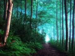 лесу, утро, великобритания