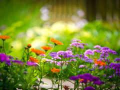 cvety, разноцветные, зелёный