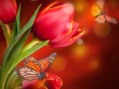 flowers, живые, розовый