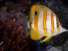 fish, okyanus, duvar