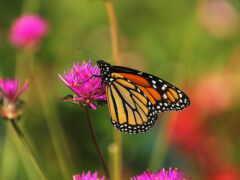 бабочка, makryi, animal