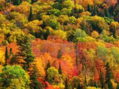 лес, краска, wallpapersafari