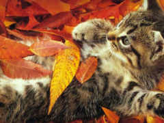 осень, веселая