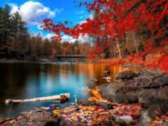 осень, природа, красивые